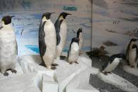 tučňáci v muzeu Fram